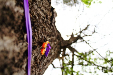 Marked Trees Series | digital print | 2012